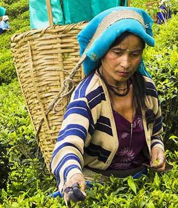 Voyage au Sikkim